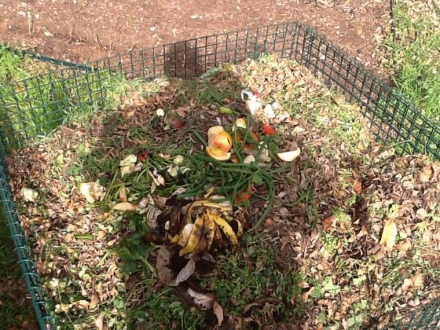 Danny's compost pile