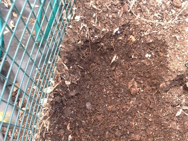 This is beautiful compost!